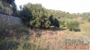 CODE 10747 - Farm parcel for sale Nikiti (Sithonia)